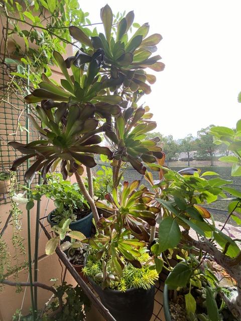 f:id:mimozaai:20201108191657j:plain