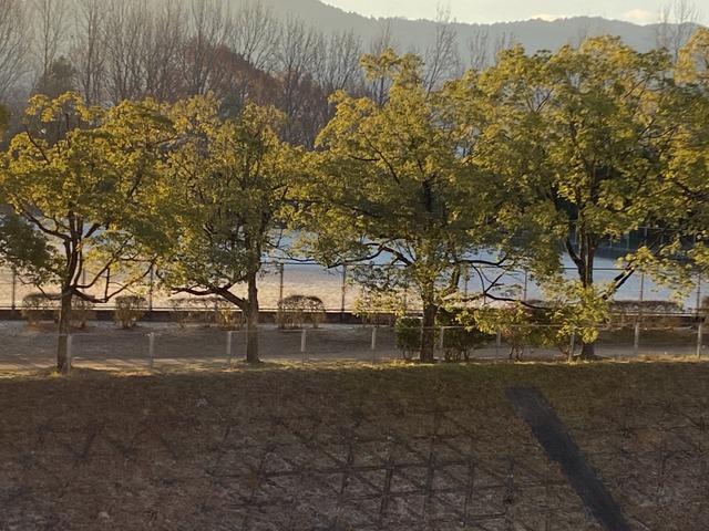 f:id:mimozaai:20201221194604j:plain
