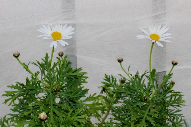 f:id:mimozaai:20201230191431j:plain