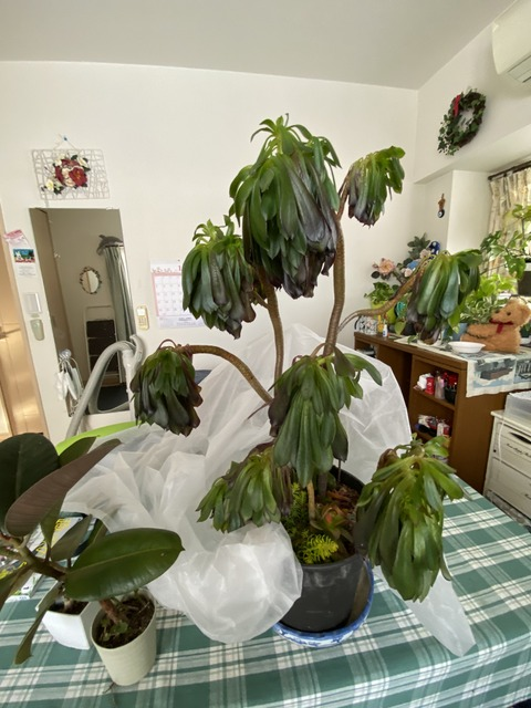 f:id:mimozaai:20210112194059j:plain