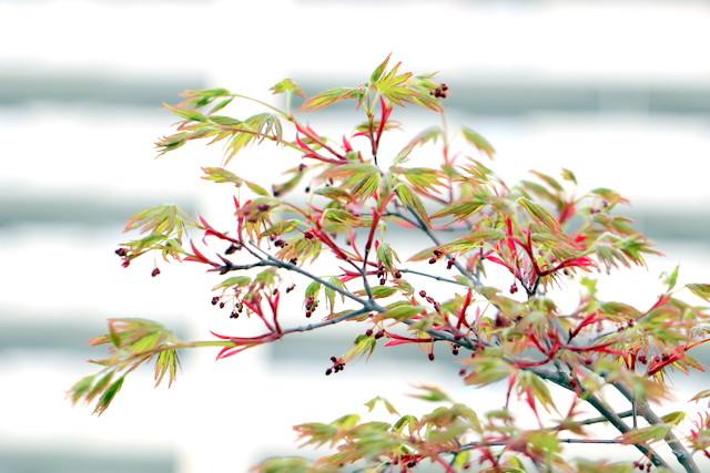 f:id:mimozaai:20210331213056j:plain
