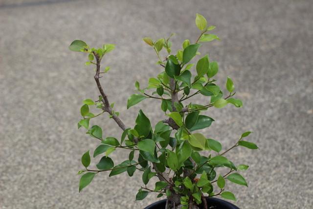 f:id:mimozaai:20210605230134j:plain