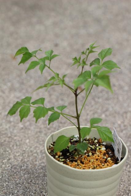 f:id:mimozaai:20210605230218j:plain