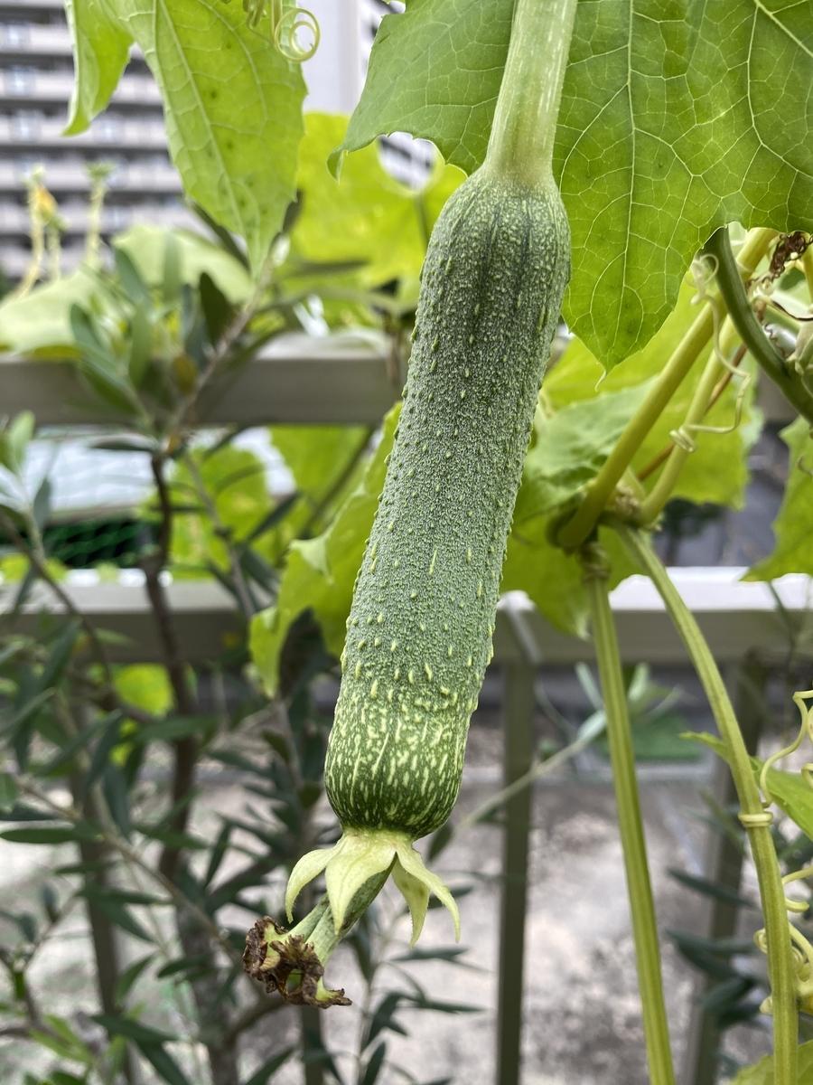 f:id:mimozaai:20210906093759j:plain