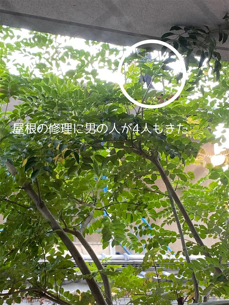 f:id:mimu_365:20201212194804j:image