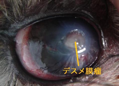 f:id:minami-animal-hospital:20130918183959j:image