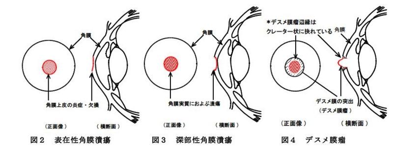 f:id:minami-animal-hospital:20130918184118j:image