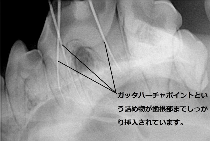 f:id:minami-animal-hospital:20160213181103j:image