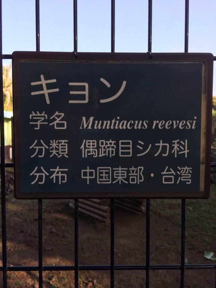 f:id:minami-no-neko:20180614212554j:plain