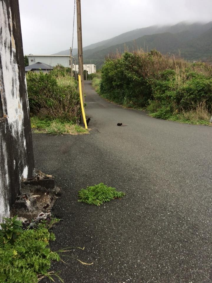 f:id:minami-no-neko:20180614213822j:plain