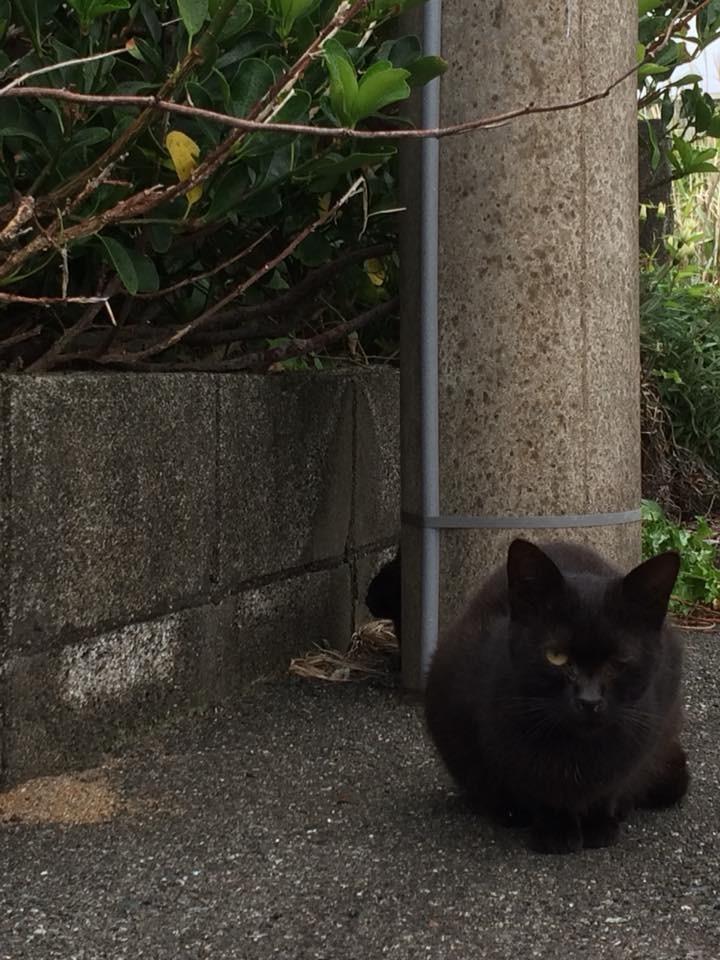 f:id:minami-no-neko:20180614213831j:plain