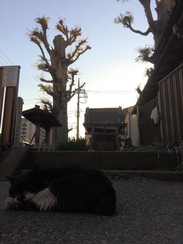 f:id:minami-no-neko:20180627222945j:plain