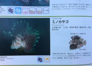 f:id:minami-no-neko:20180710121648j:plain