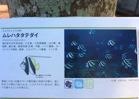 f:id:minami-no-neko:20180710122333j:plain