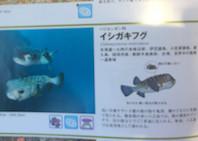 f:id:minami-no-neko:20180710122913j:plain
