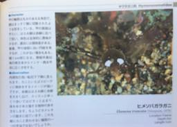 f:id:minami-no-neko:20180710123248j:plain