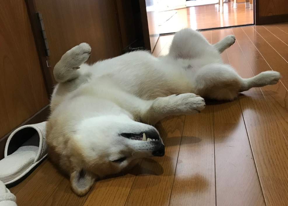 f:id:minami-no-neko:20180823113026j:plain