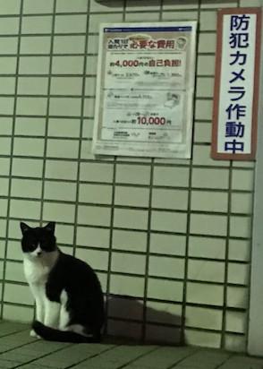 f:id:minami-no-neko:20180831220955j:plain