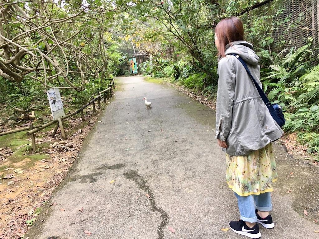 f:id:minami-saya:20190219144304j:image