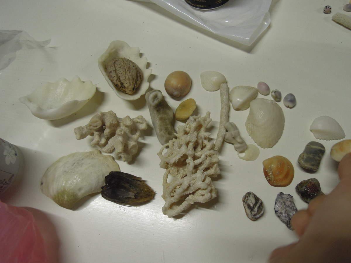 小浜荘 拾った貝