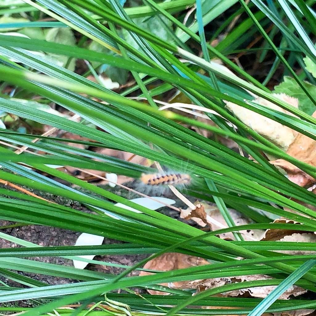 蛾の幼虫 斑点 秋の庭