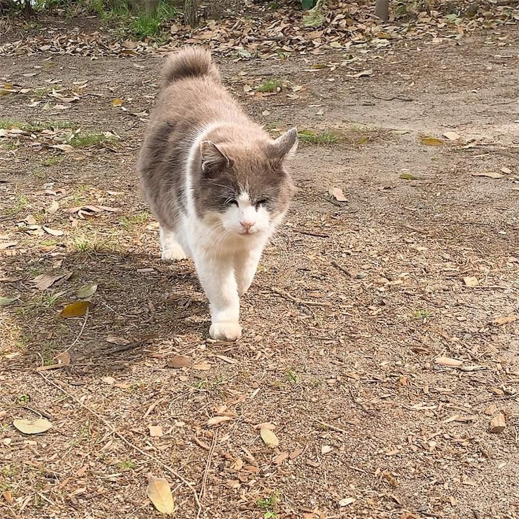 大濠公園 野良猫 かわいい 写真