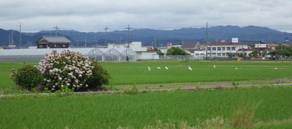 f:id:minamibiwako:20210420165043p:plain