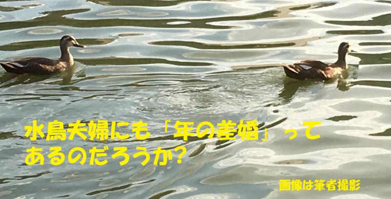 f:id:minamiblog:20160925215957p:plain