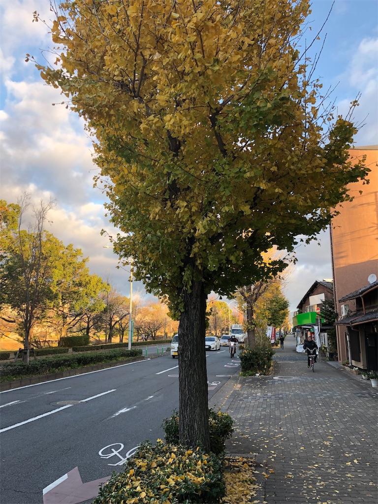 f:id:minamichankawai:20181208093541j:image