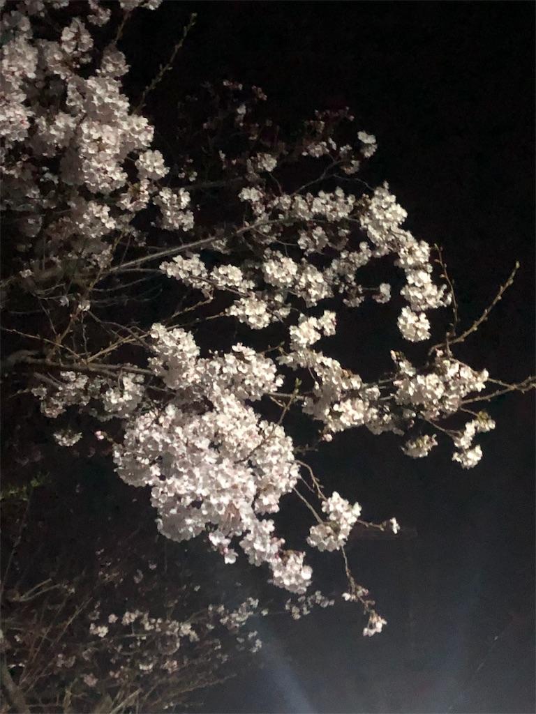 f:id:minamichankawai:20190404044814j:image
