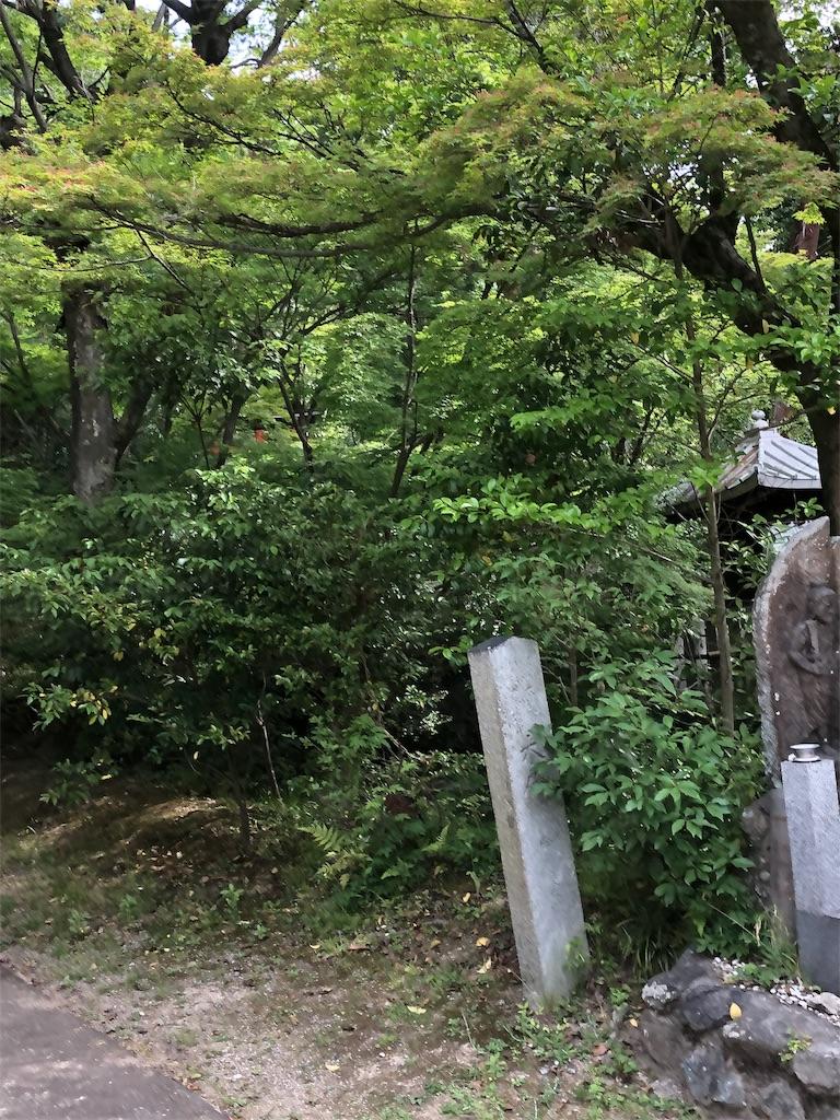 f:id:minamichankawai:20190519105240j:image