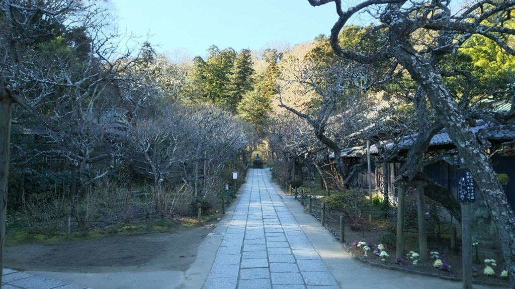 f:id:minamimachida0706:20170126000657j:plain