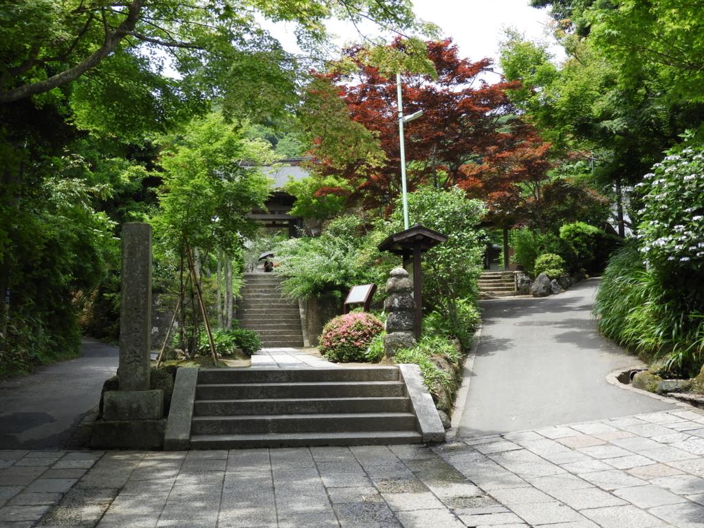 緑に包まれた海蔵寺の山門