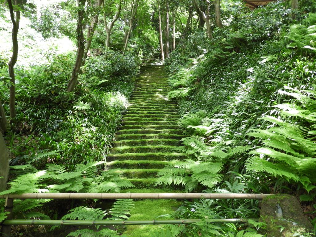 妙法寺の苔の石段