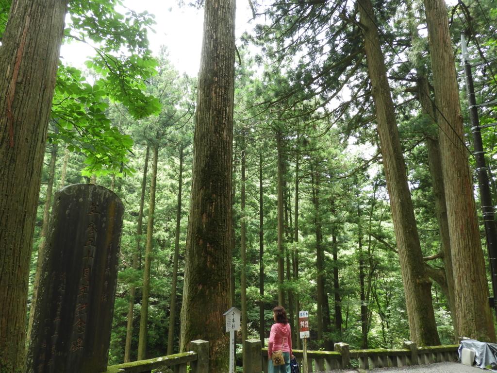 樹齢百年以上の杉が千本以上ある榛名神社の千本杉