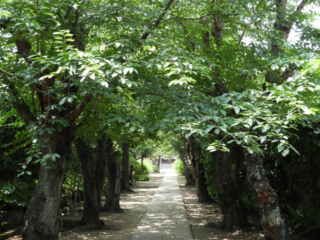 極楽寺の境内
