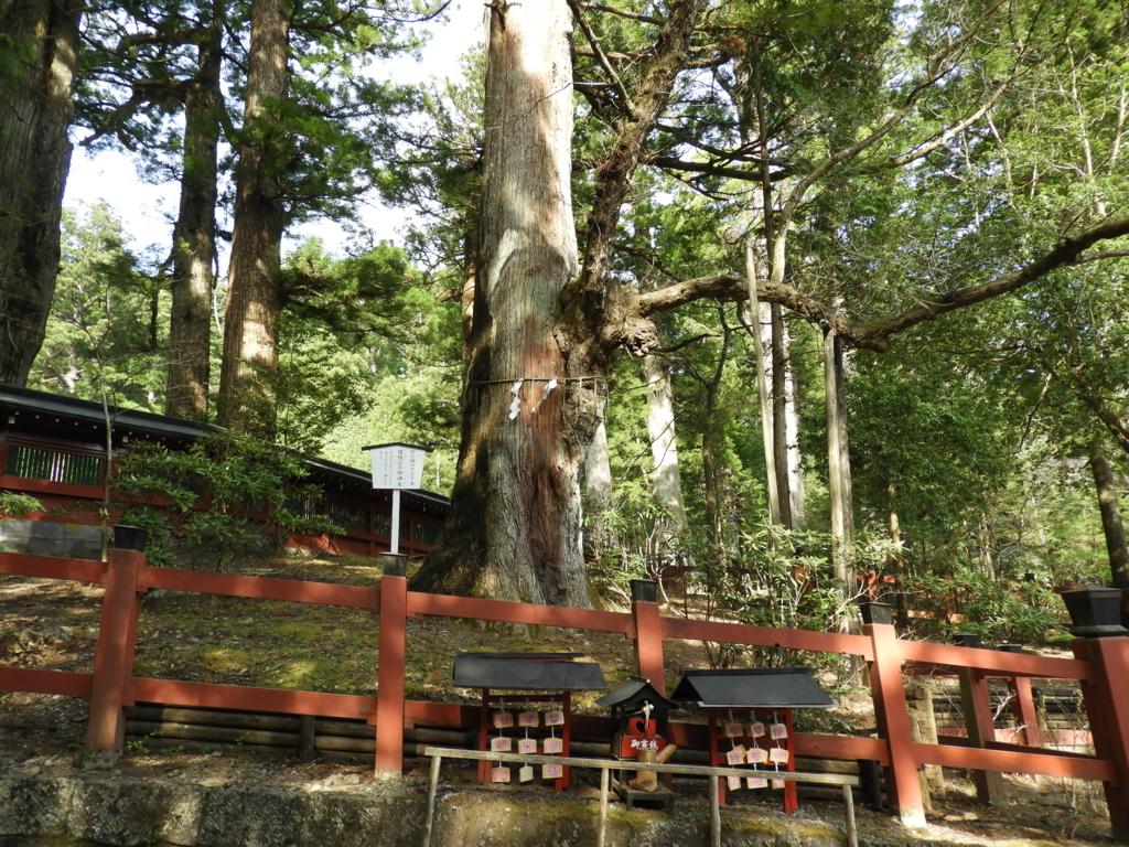 二荒山神社の縁結びの御神木