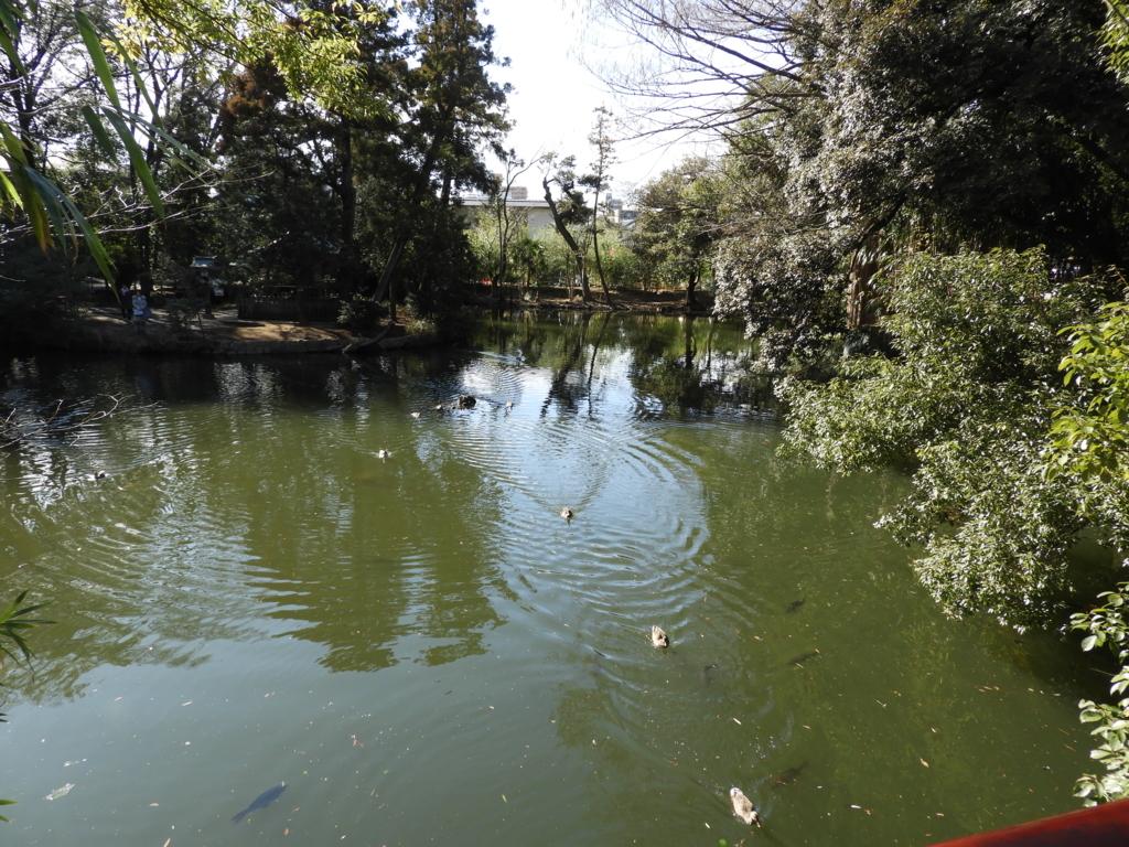 武蔵一宮氷川神社の神池の水鳥と魚