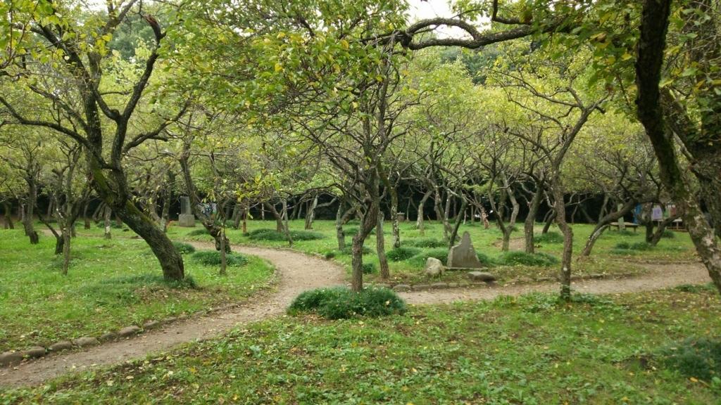 谷保天満宮境内の梅林