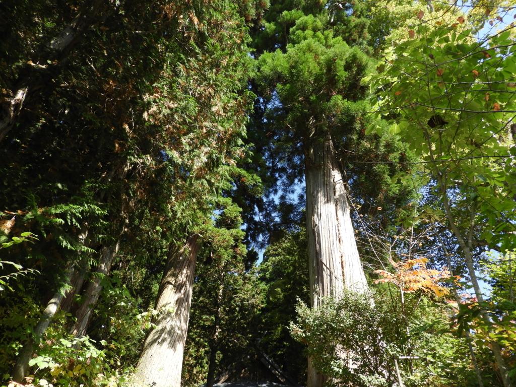 鳥居の先に立つ2本の杉の巨木