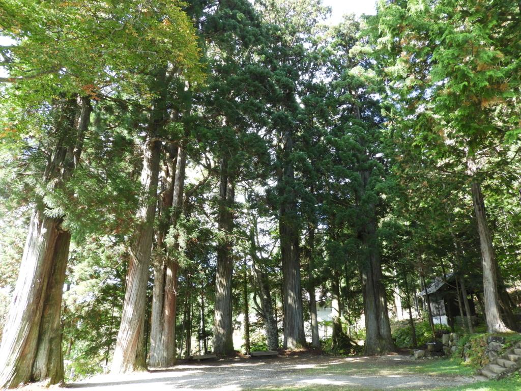 戸隠神社火之御子社の前庭を囲んで立つ杉の巨木