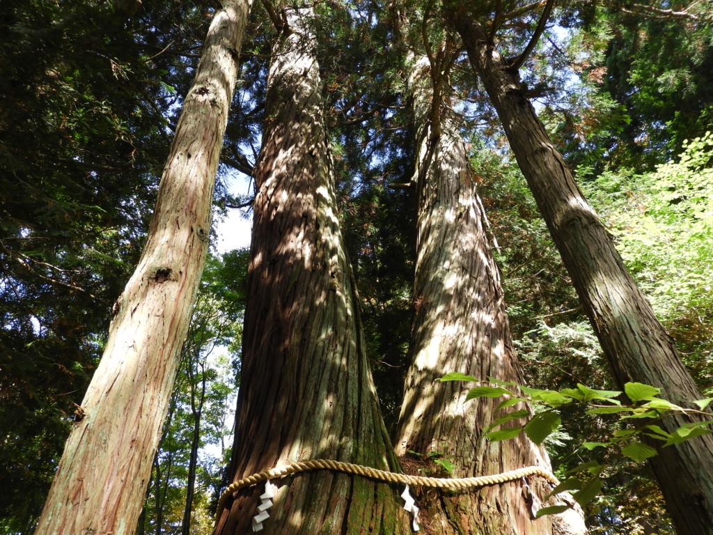 二本の杉が根元で結び付いている之本杉