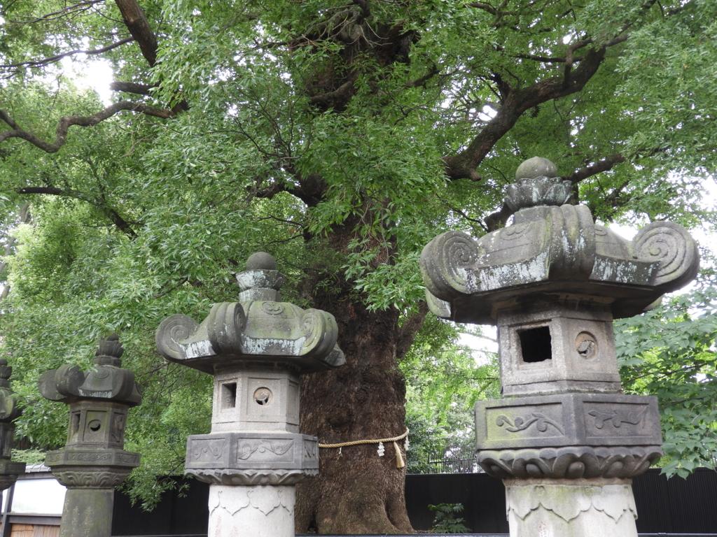 ご神木である大楠。手前に石灯籠が並んでいる。