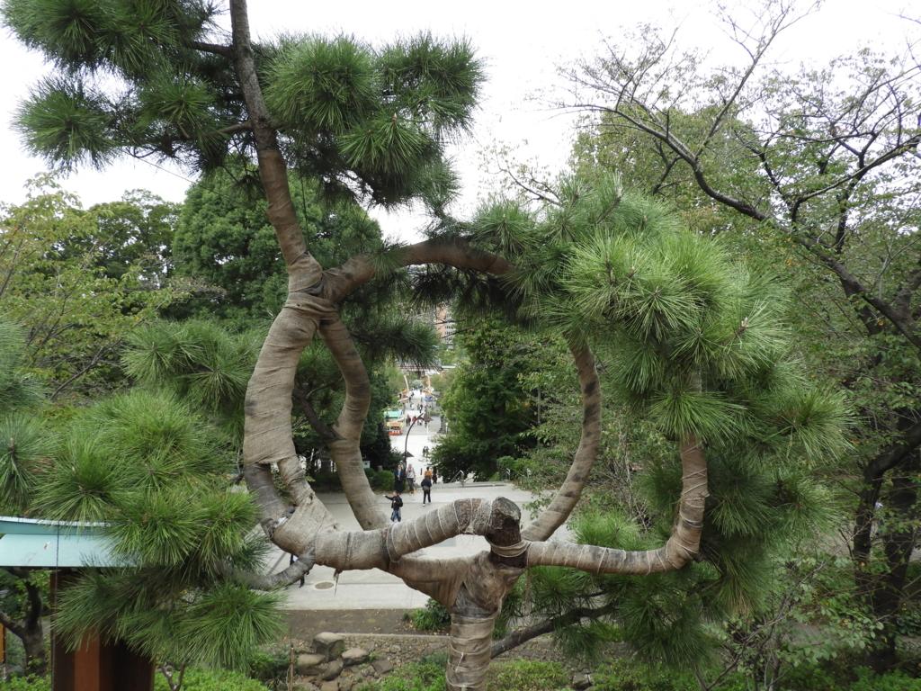 「名所江戸百景」の一つである清水観音堂の「月の松」