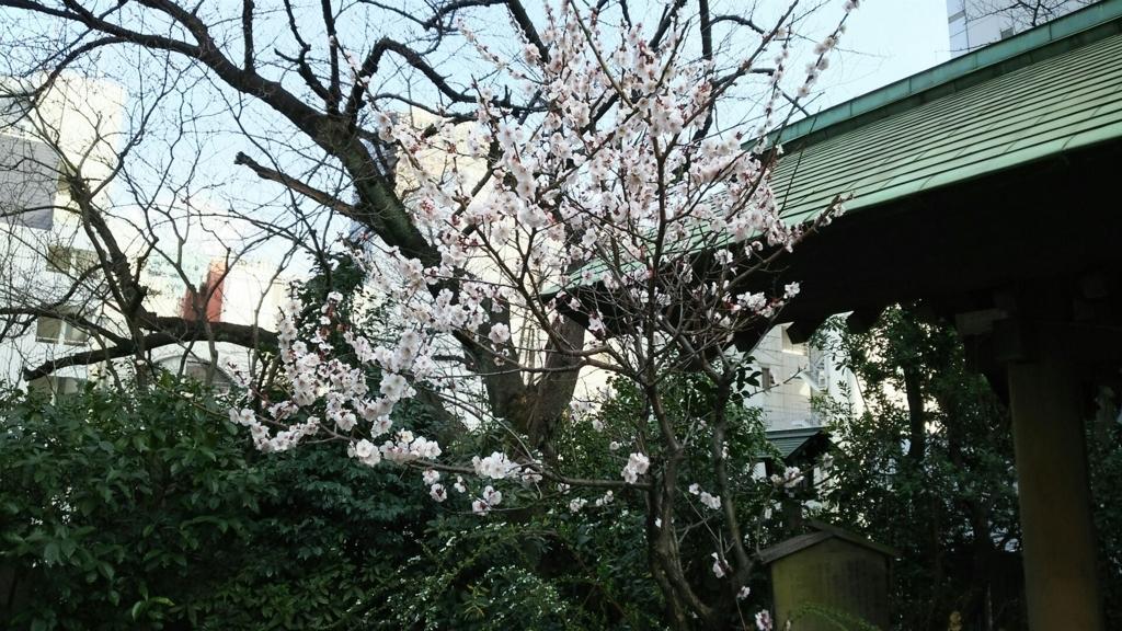境内で咲いていた梅の花