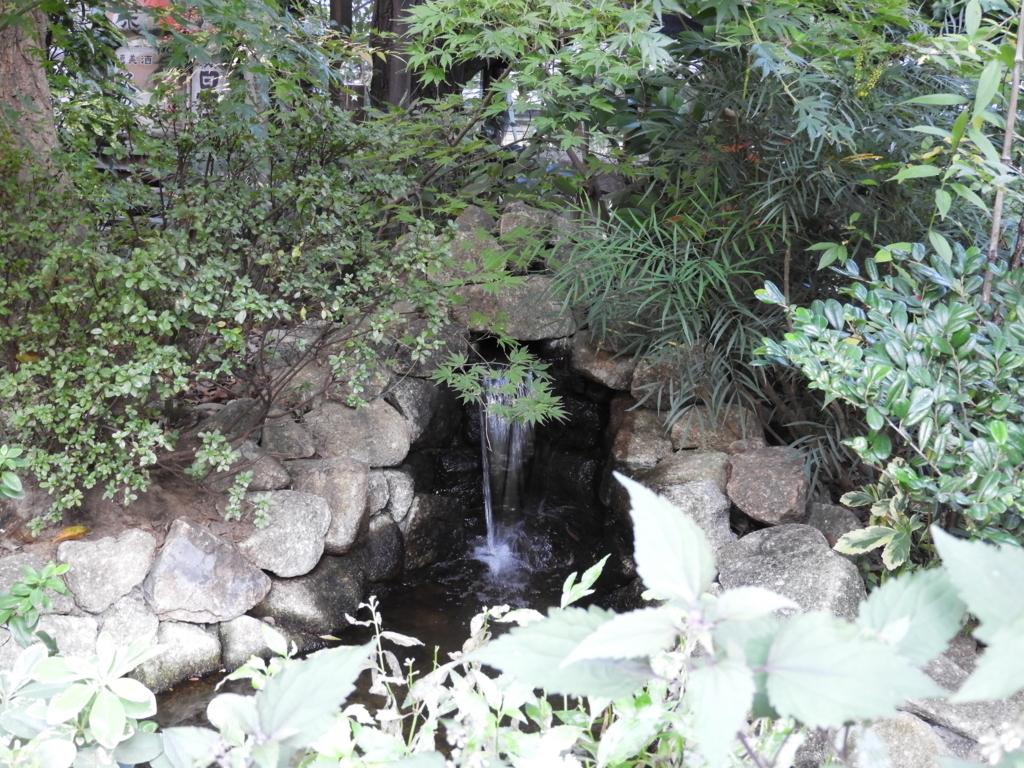 東京大神宮のご神木の根元から流れ出す水