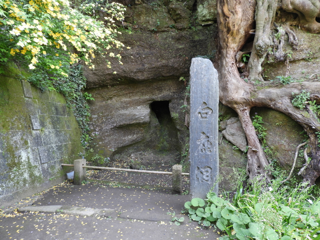 白い鹿が群れを成して現れた円覚寺の白鹿洞