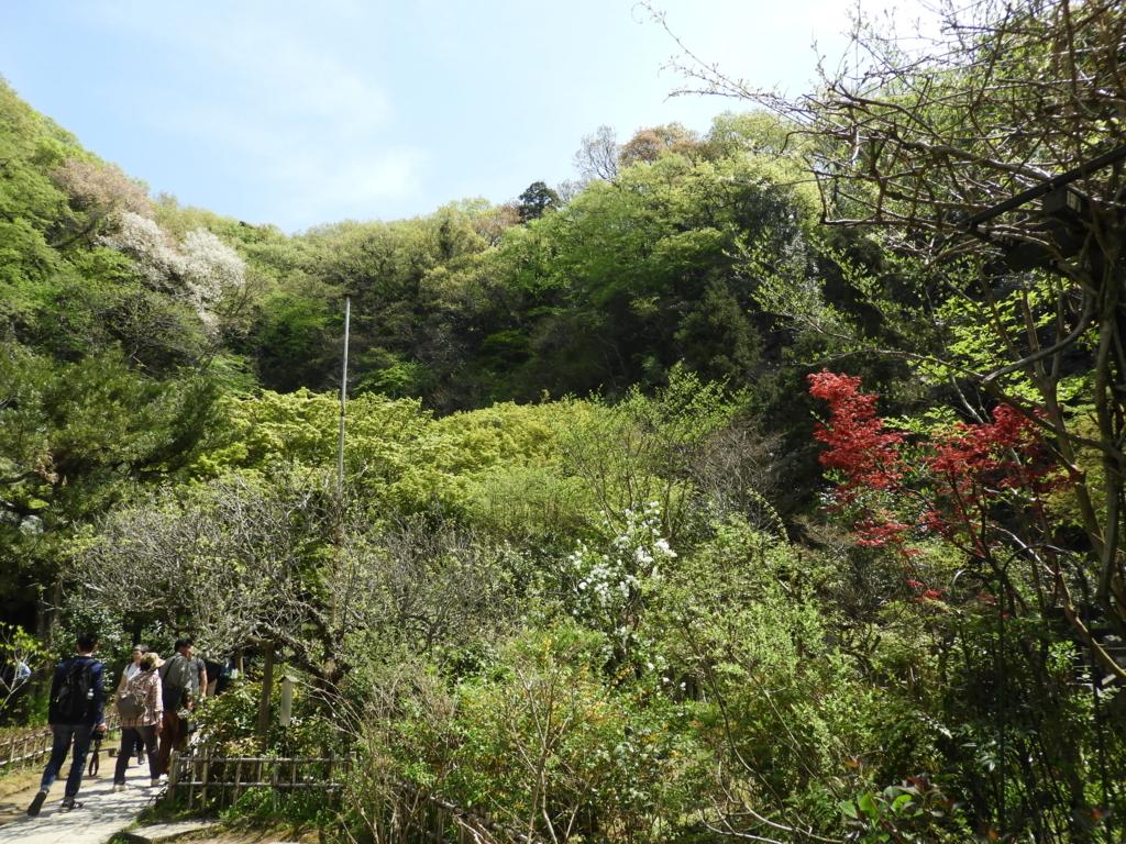 緑が美しい円覚寺の黄梅院の境内