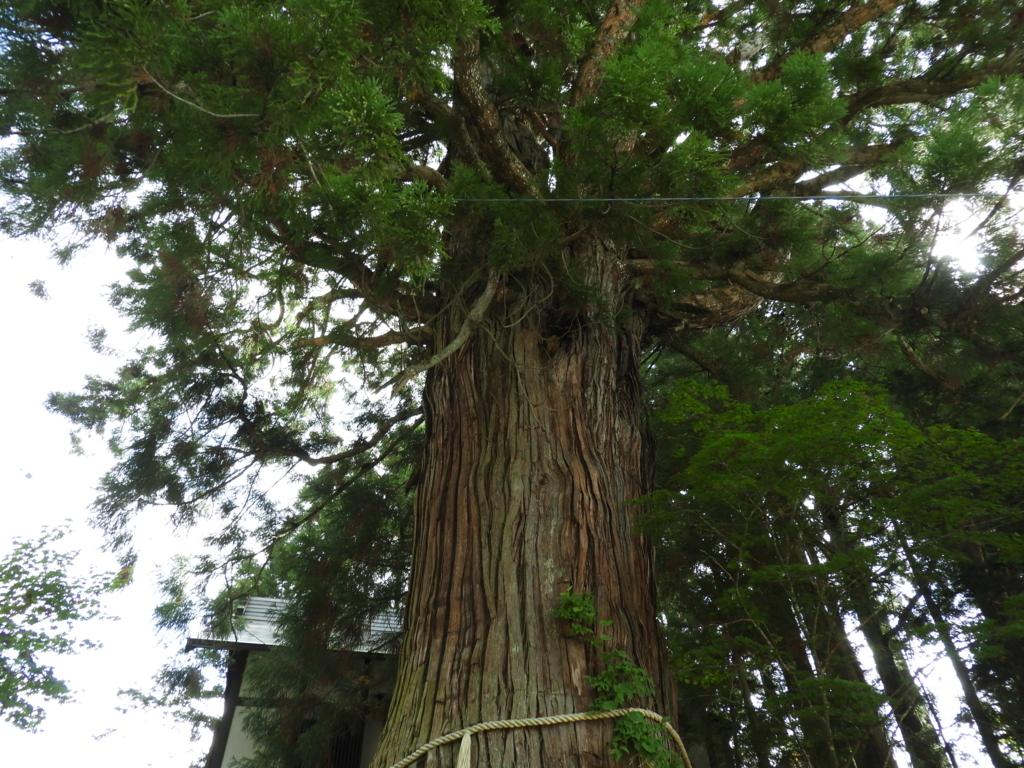 戸隠神社中社の三本杉の内の「ろ」の杉