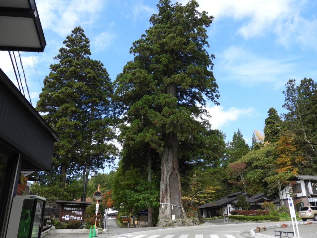 戸隠神社中社の三本杉の内の「は」の杉